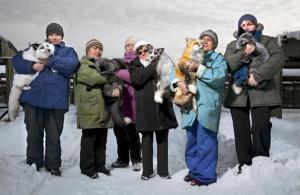 die zahmen Füchse von Novosibirsk